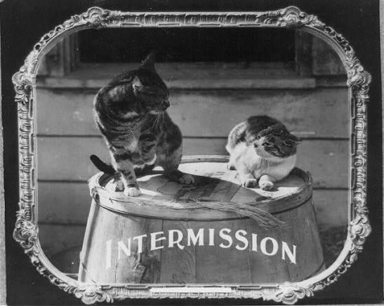 intermission cats